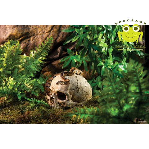 Декорация для террариума череп человека Exo Terra Primate Skull
