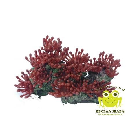Коралл SH 301