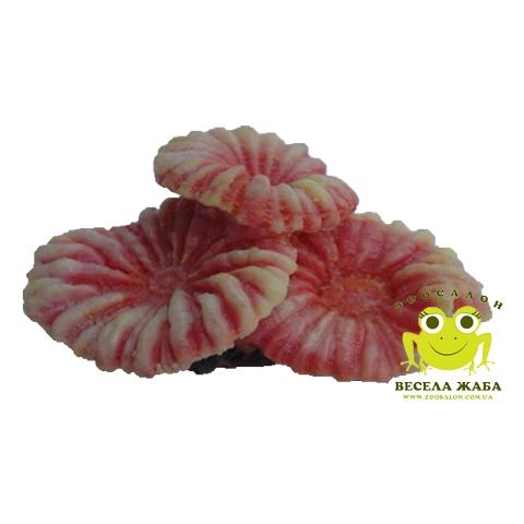 Коралл SH 014 разноцветные