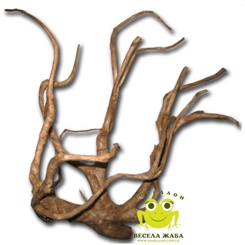 Коряга Азалия 40-55 см